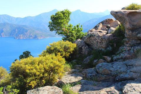rocks in Calanches de Piana